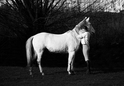 horse portrait photography west midlands