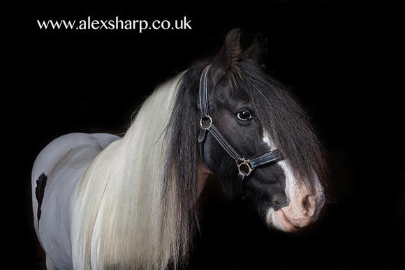 equestrian photographer bromsgrove