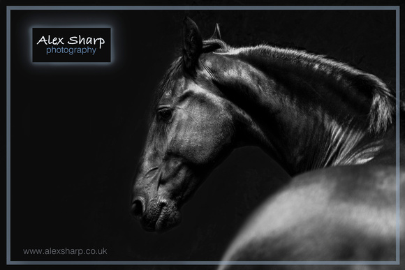 Equestrian Photographer Alex Sharp