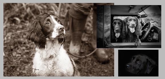 Pet Portraits Worcestershire
