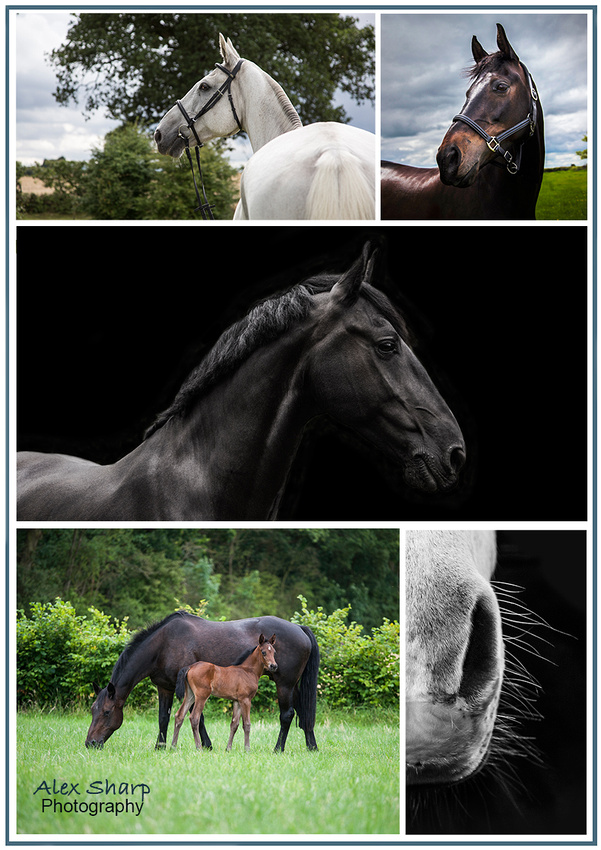 equestrian photographer west midlands