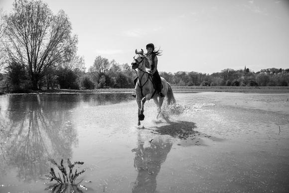 horse photographer west midlands