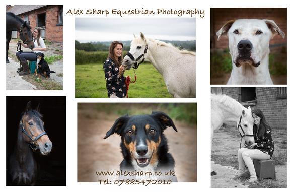 horse portraits worcestershire