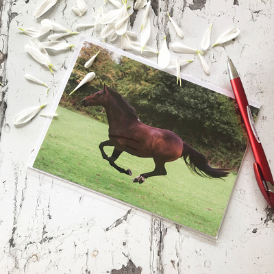EGC006 Look I'm Flying - Horse greeting card