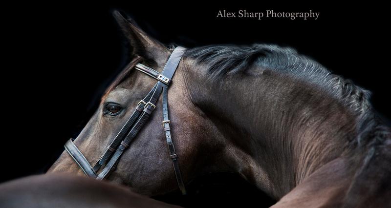 equestrian portrait photographer Alex Sharp