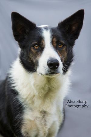 pet photographer Alex sharp