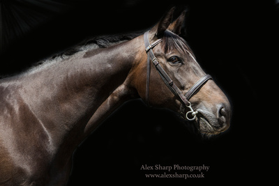 horse photographer Alex Sharp