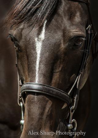 HORSE photographer worcestershire