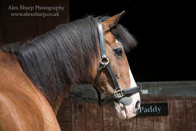 Alex sharp equestrian photography 1