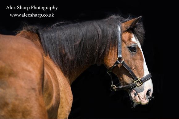 horse photographer 8