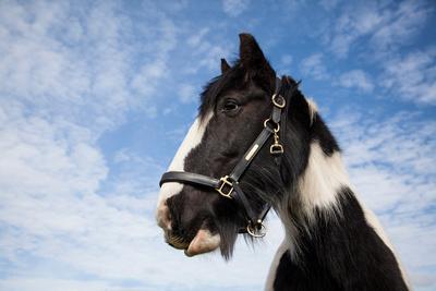 equestrian portraits uk