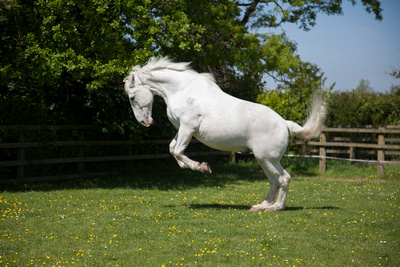 equestrian portraits redditch