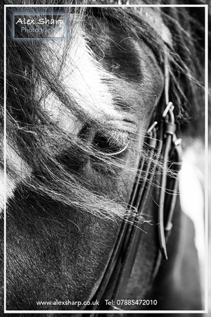 Equestrian photography Worcestershire Alex Sharp