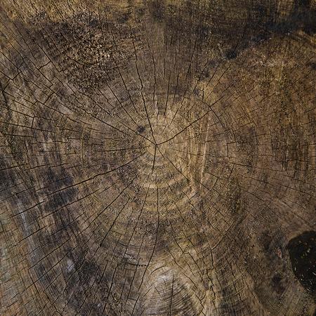 sliced tree trunk web size
