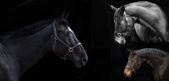 equestrian photographer worcestershire