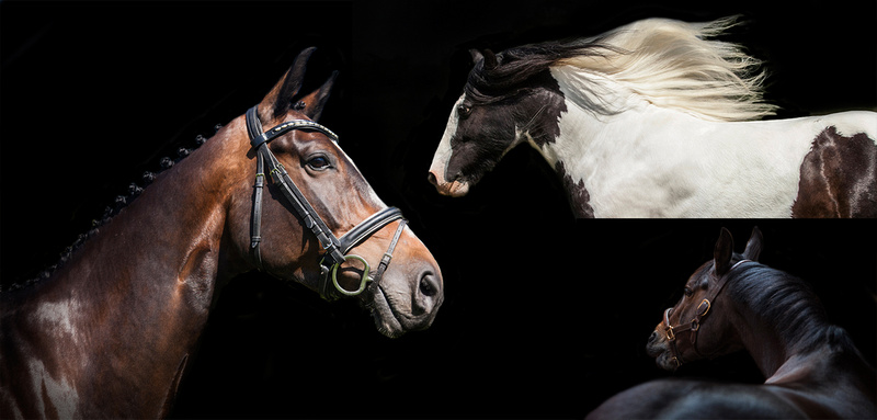 equestrian photographer warwickshire