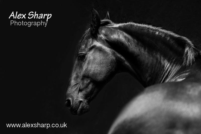 Equestrian Photographer Alex Sharp copy