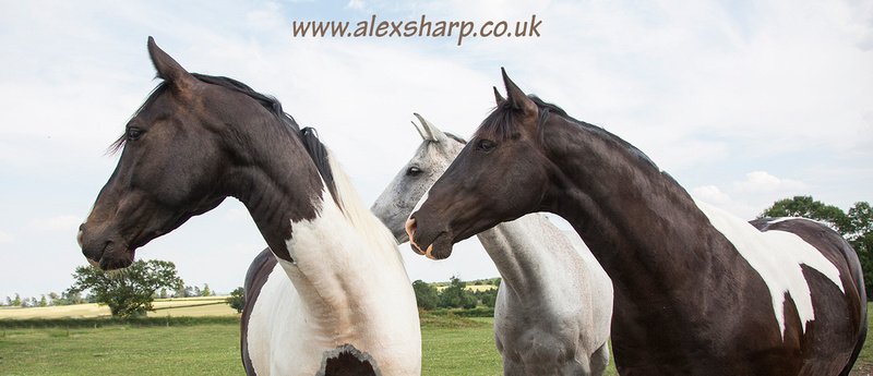 The horse photographer Alex Sharp